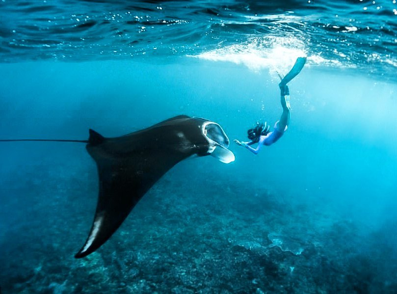 Best tours in Bali: swimming with Manta Rays.